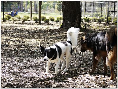 Eagle Lake County Dog  Park