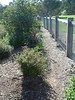 timber post and rail fence with wire mesh