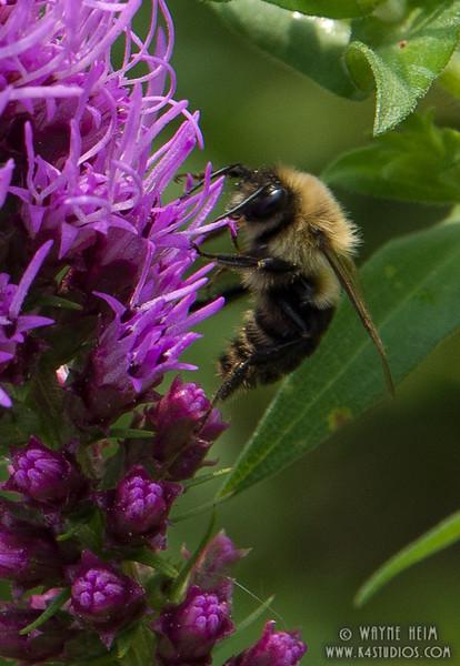 Making Honey   Photography by Wayne Heim