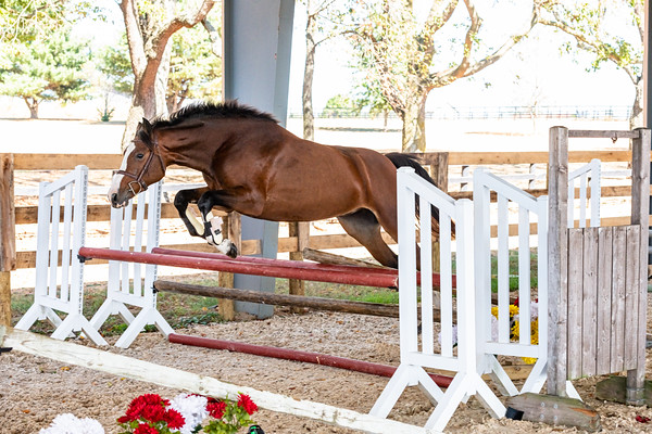 Horse 4 - Kara