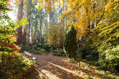 George Tindale Gardens Sherbrooke Forest Australia