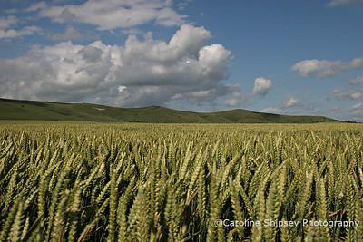 Wiltshire - Crop Circle Country