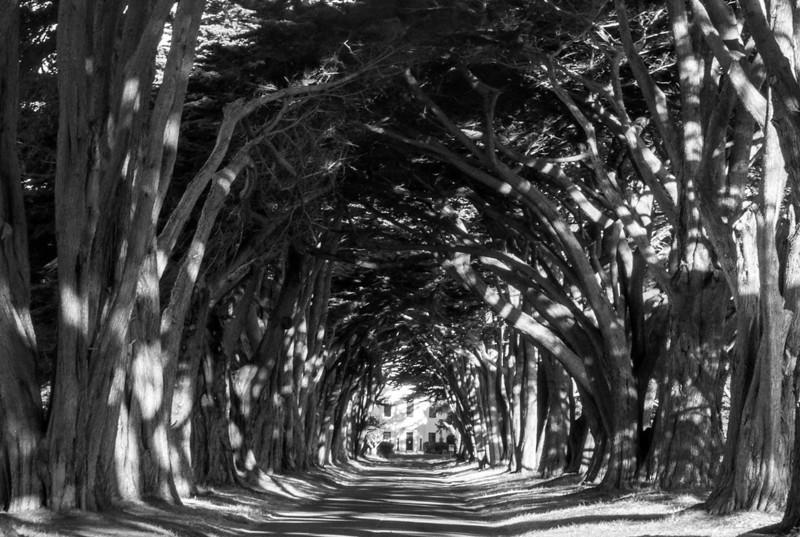 cypress tunnel afternoon.jpg