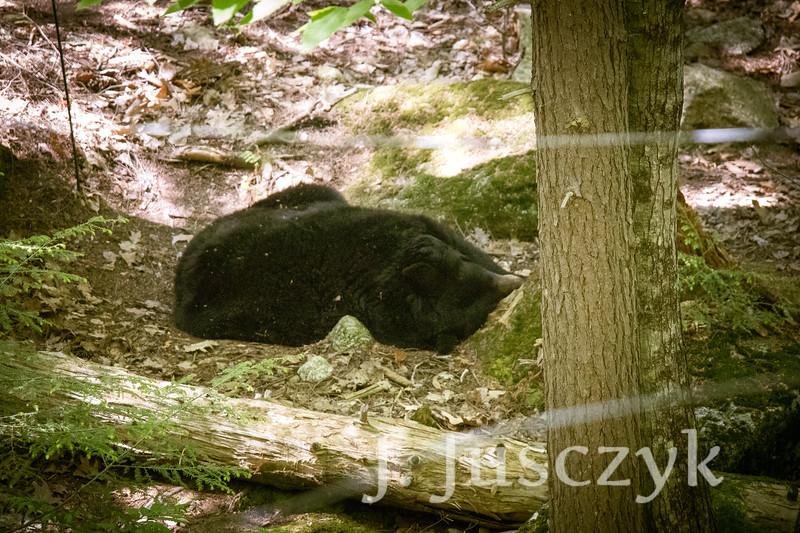 Jusczyk2021-7225.jpg