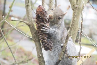 Squirrel Photo, SUBMITTED, Sue Dolan, Tamaqua (1-31-2013)
