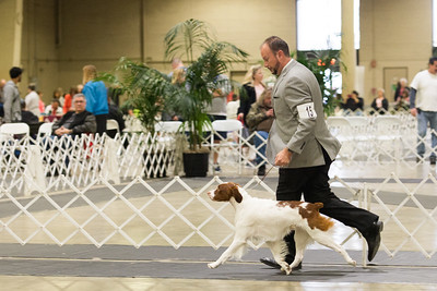 2019 Kennel Club of Beverly Hills Day 2