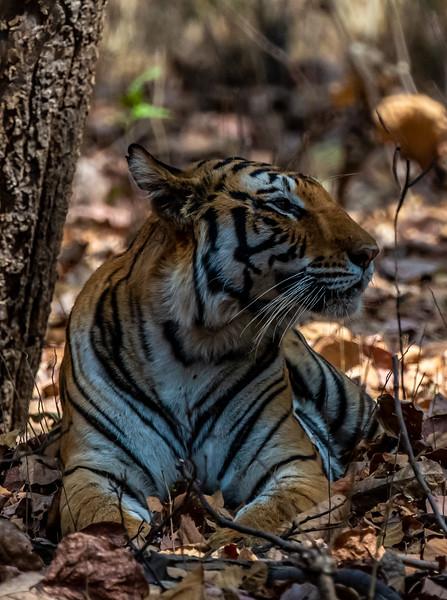 India_April_2019-106.jpg