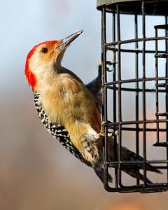 Miscellaneous Birds 2011-2012