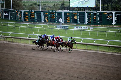 EIPA at the Races 2020