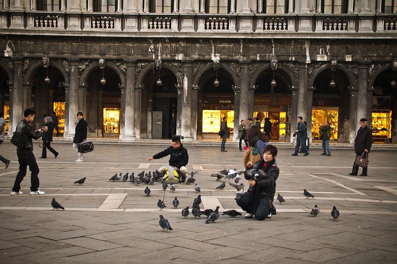 venice pigeons.jpg