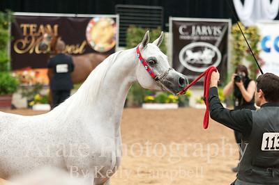 Arabian Breeders Cup Las Vegas