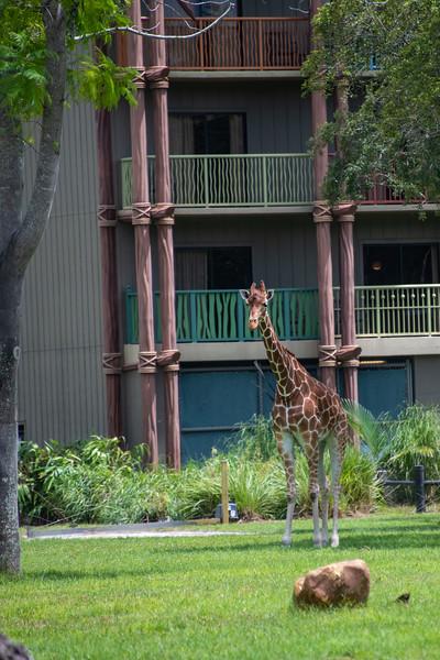 Dinsey Resorts-2-229.jpg