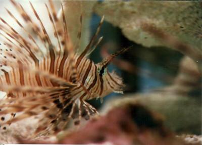 Captive underwater life