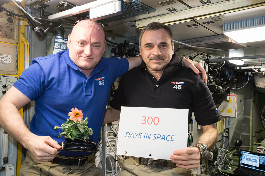 . In this Jan. 21, 2016 photo made available by NASA, one-year mission crew members Scott Kelly of NASA, left, and Mikhail Kornienko of Roscosmos celebrate their 300th consecutive day in space. By spending 340 days aboard the International Space Station, the astronauts will help scientists understand what happens to the human body while in microgravity for extreme lengths of time. Kelly is holding a zinnia plant grown in space as part of the Veggie experiment on the International Space Station. (NASA via AP)