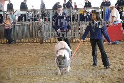 2011 Klein ISD Swine Show Class 1