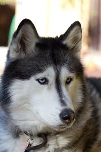 0004-Sierra Dog