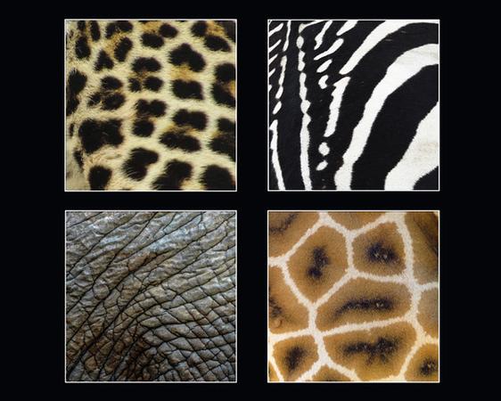 an00f-S11-WENDY-ANIMAL-Skin Collage - 16 x 20.jpg