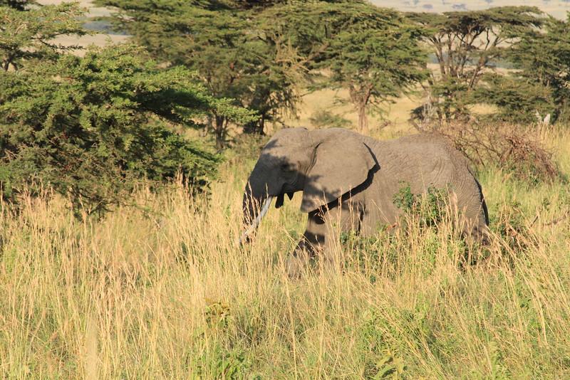 Kenya Part2 '15 281.JPG