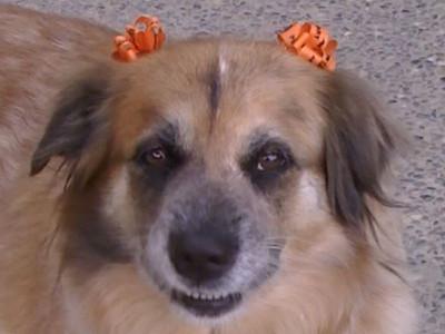 2007/10/31 >> Sandy has Halloween Ribbons