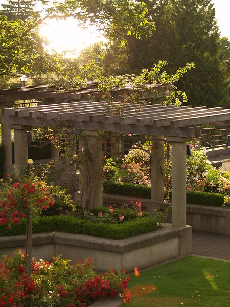 Another view of the late July sunset from the UBC Rose Garden (2006).
