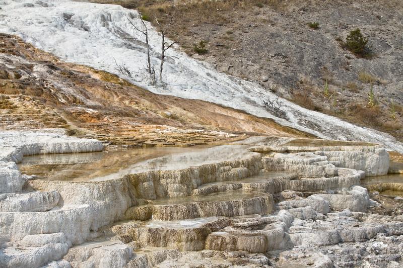 Palette Spring, Mammoth Hot Springs