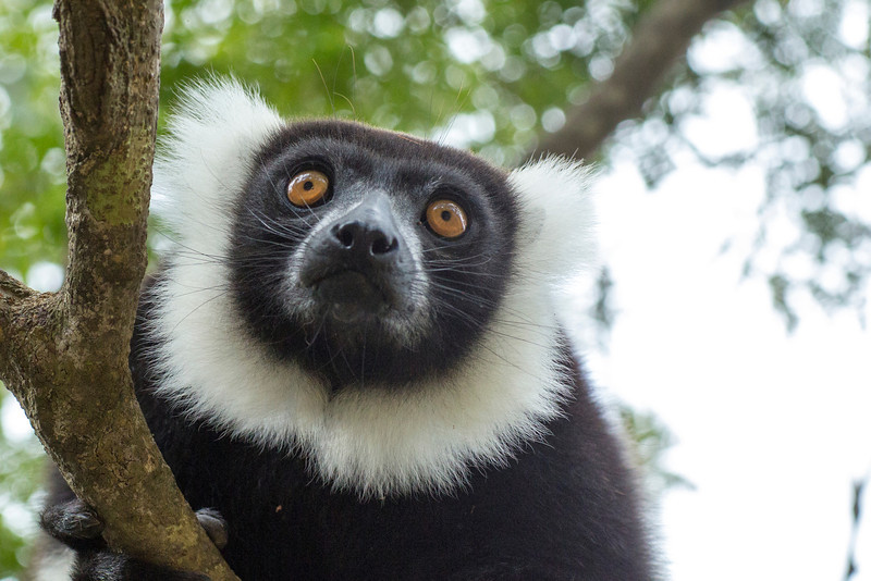 Madagascar_2013_IG3A2298.jpg