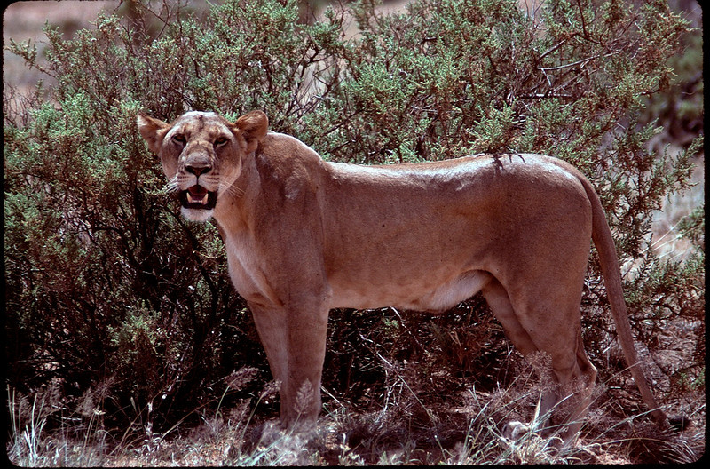 Kenya1_113.jpg