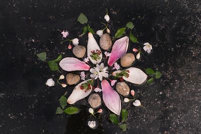 Magnolia Dance