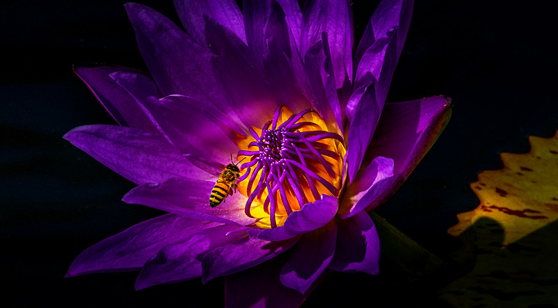 Lily and Honey Bee - 8.jpg