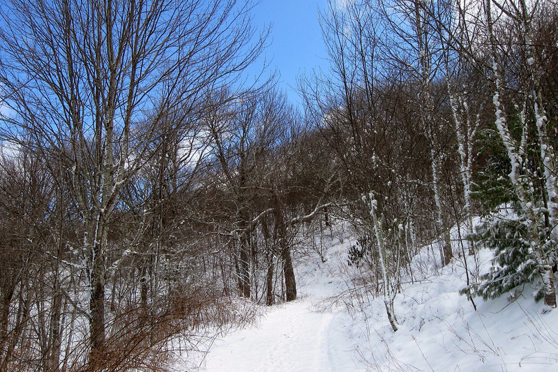 A few minutes of steady uphill walking in and the trail enters the woodlands on the west side of the summit...