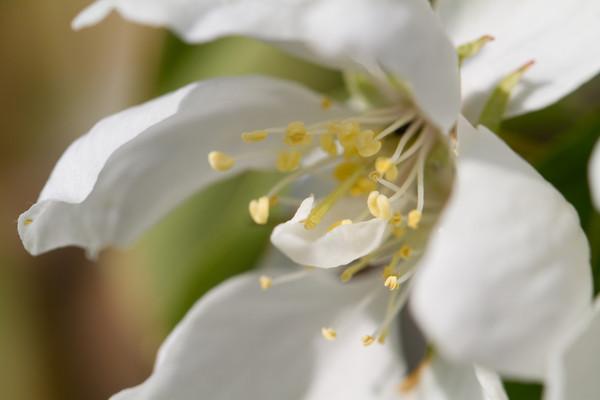 2011-04-22 flowers