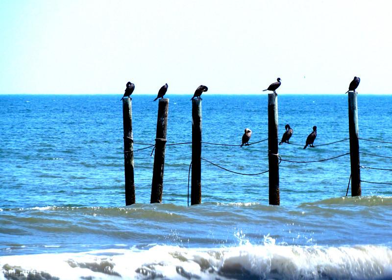 Outer Banks Corolla (235).jpg