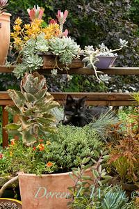 Garden Critters, Birds & Such