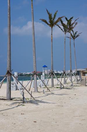 2/5/2011 Torri Beach