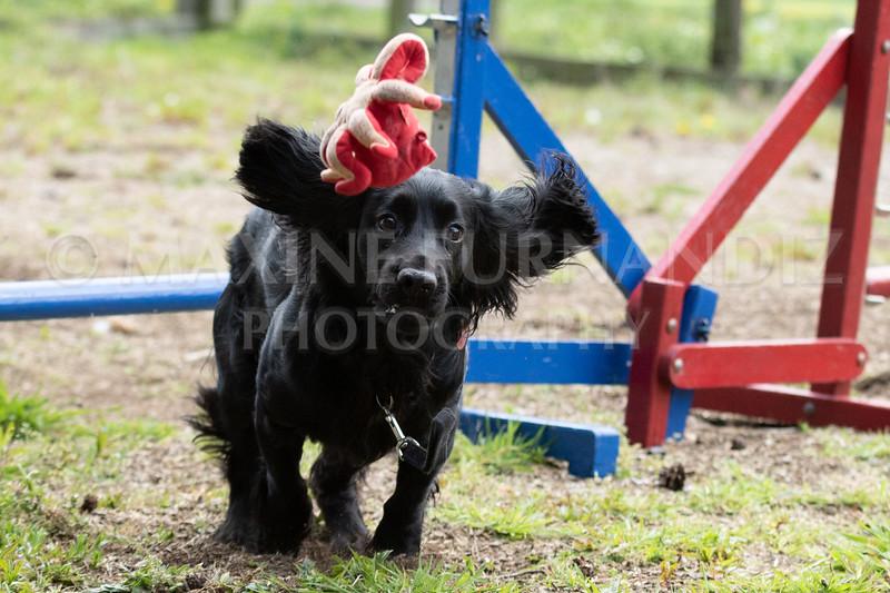Dogs-7952.jpg