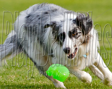 SPRINGVILLE DOG PARK GALLERIES