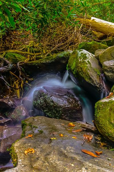 Smoky Mountains 5