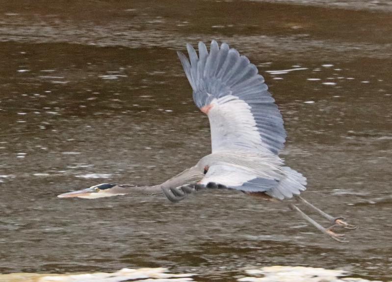 Heron 94