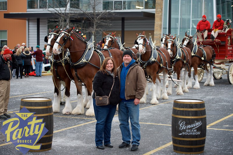 Clydesdale Portraits 31.jpg