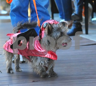10/24/17 Pooches On The Patio with Halloween Costume Contest by Pete Houting