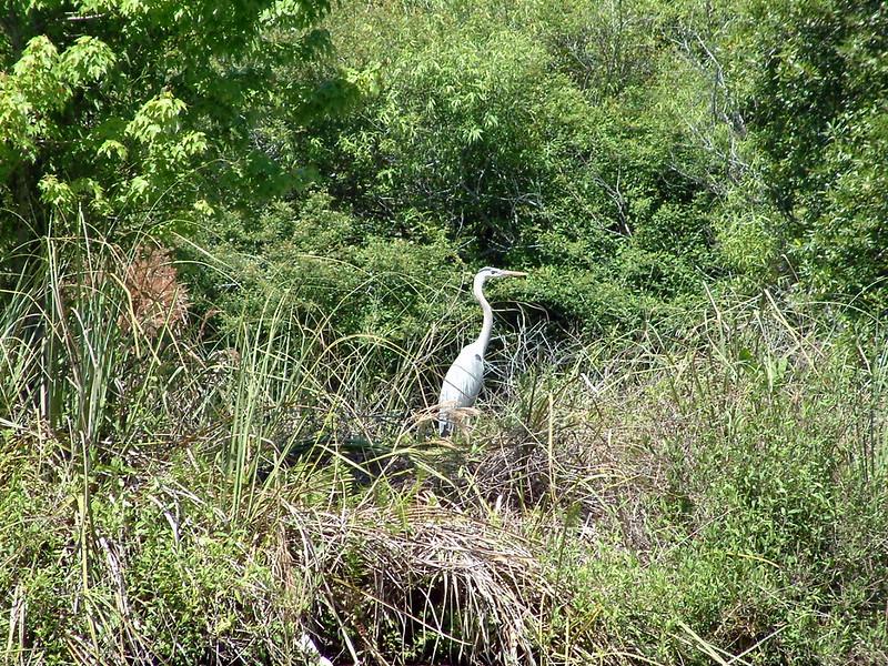 Tarpon Springs FL Wildlife (4).jpg