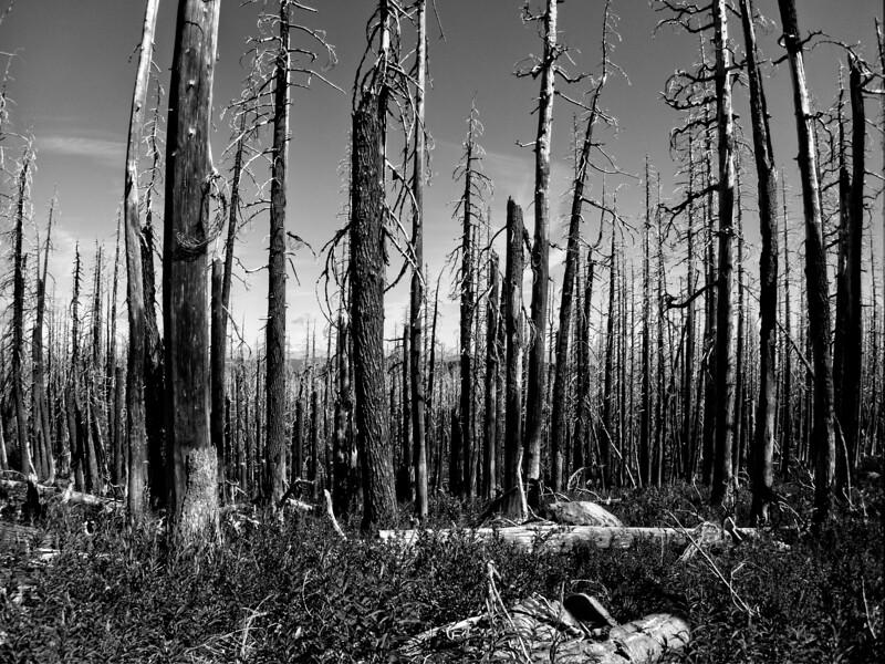 Barrett Spur © Chiyoko Meacham
