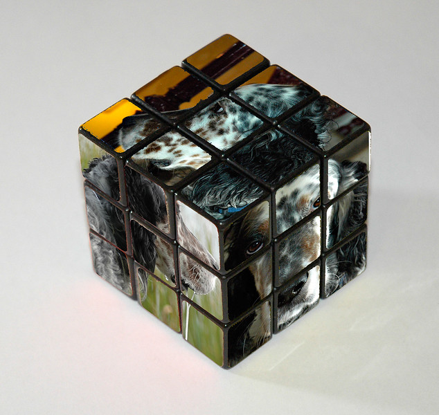 _DSC1247 Rubic_s dog PA3.jpg