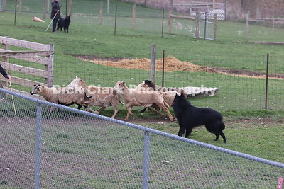 Sunday Started Sheep Part 2
