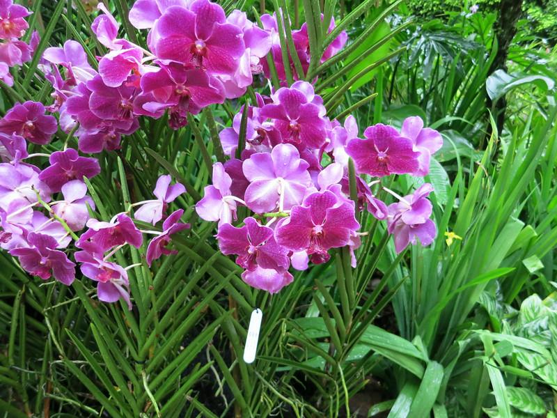 1705 Orchid Garden.jpg