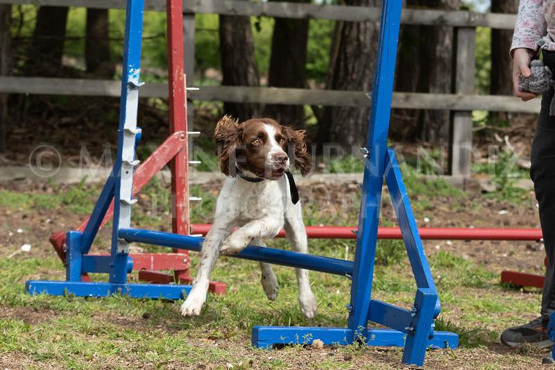 Dogs-7913.jpg