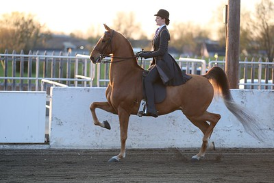 14. Adult 3 Gaited Country Pleasure