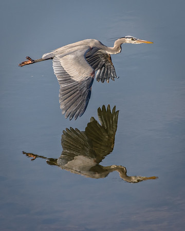 January Wildlife at Bagnell Dam