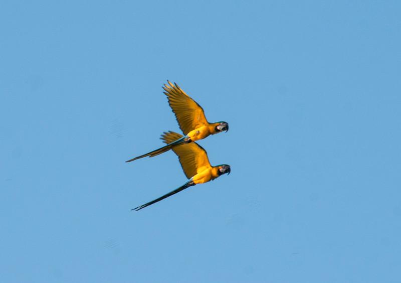 Amazon_Birds40.jpg
