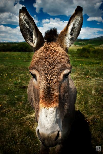 20080618-DonkeyFace.jpg